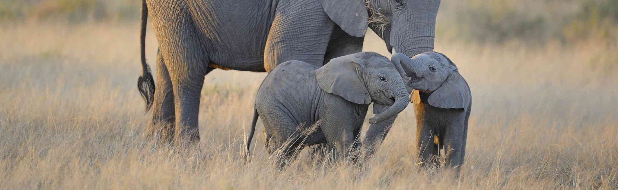 Baby Elephant Twins