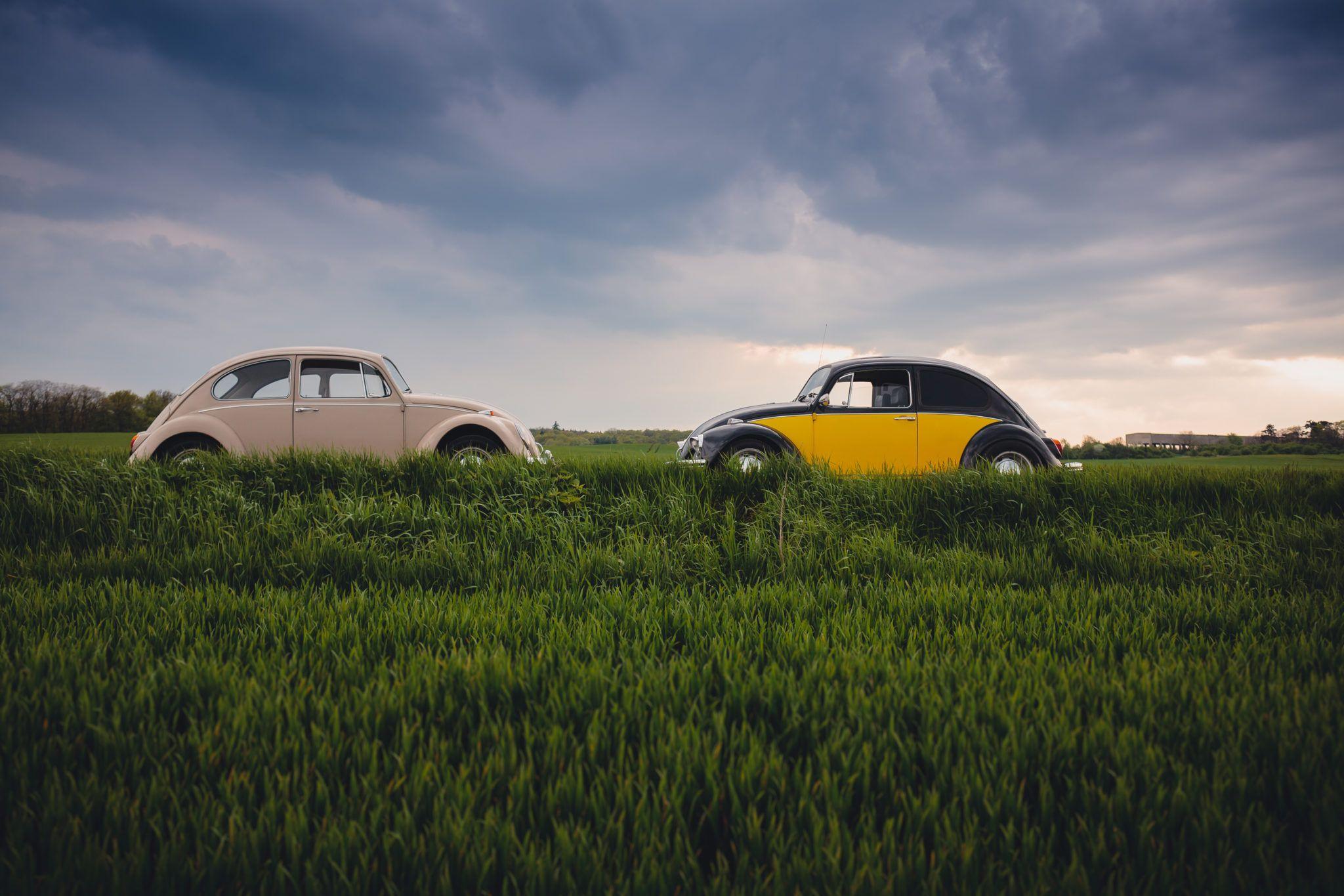 Two VW bugs head to head in a grassy field